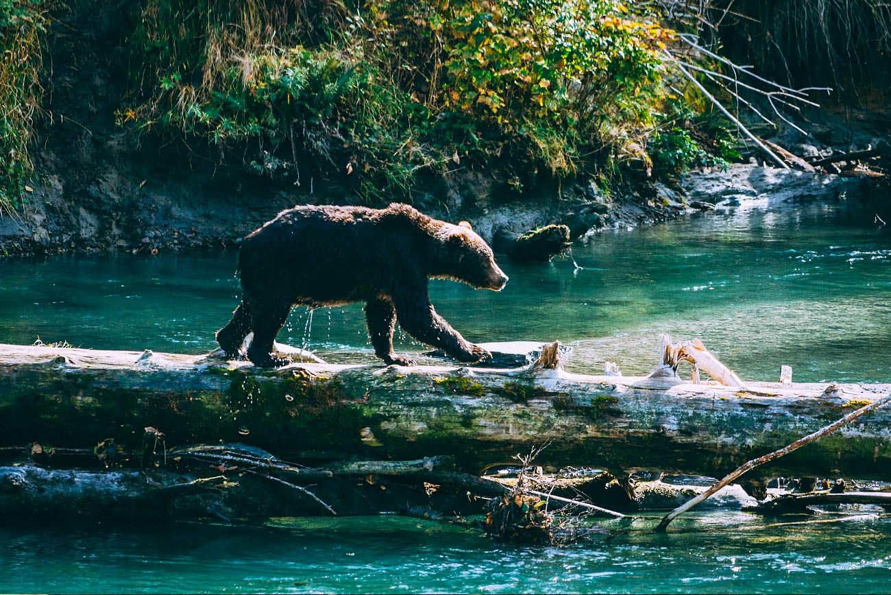 coastal cruises commercial bear viewing